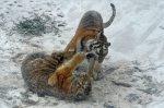Tigrisek (MTI-fotó)