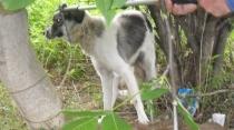 A fához drótozott kutya mentése - Állatbarát Alapítvány, Nyíregyháza
