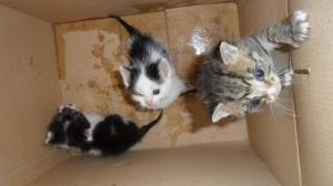 Kiscicák az Állatbarát Alapítványnál Nyíregyházán